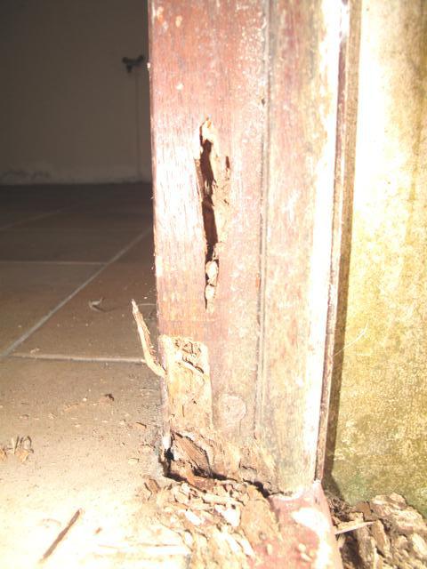 traitement antitermites par appat guadeloupe jarry termitechniques baie mahault termitechnique. Black Bedroom Furniture Sets. Home Design Ideas